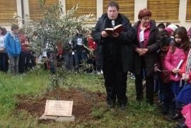 The tree in honour of Gino Bartali