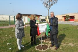 The plaque and the oak in honour of Giorgio Perlasca