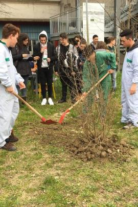Students of TI Calvi during the planting