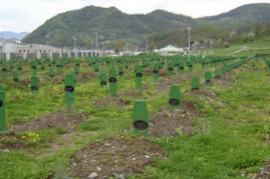 Srebrenica, the Memorial of genocide in Potocari