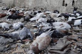 Victims of gas attacks in Syria (picture by CNN)