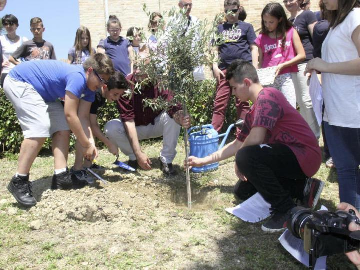 Planting of the tree