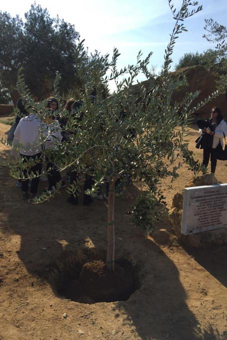 3 December - dedication of a tree to Father Pino Puglisi in the Temple Valley of Agrigento