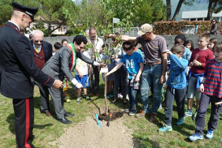 The planting of the tree