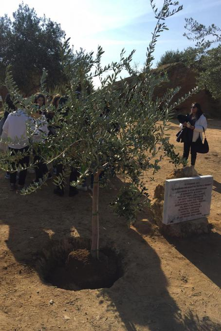 The olive tree for Father Pino Puglisi