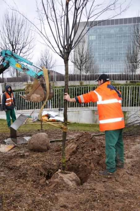 The planting of the trees
