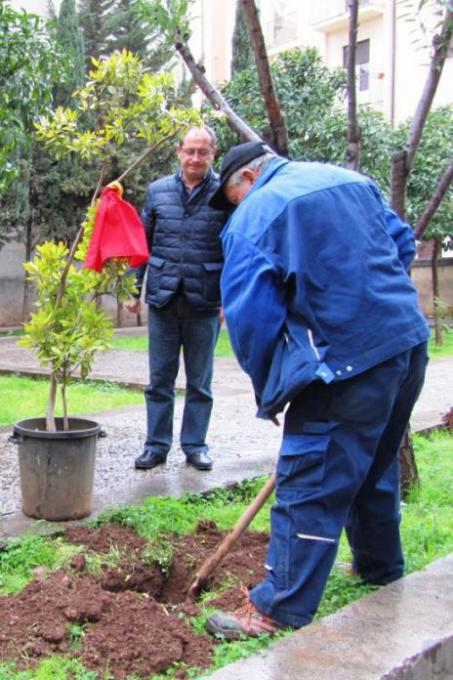 The tree' planting