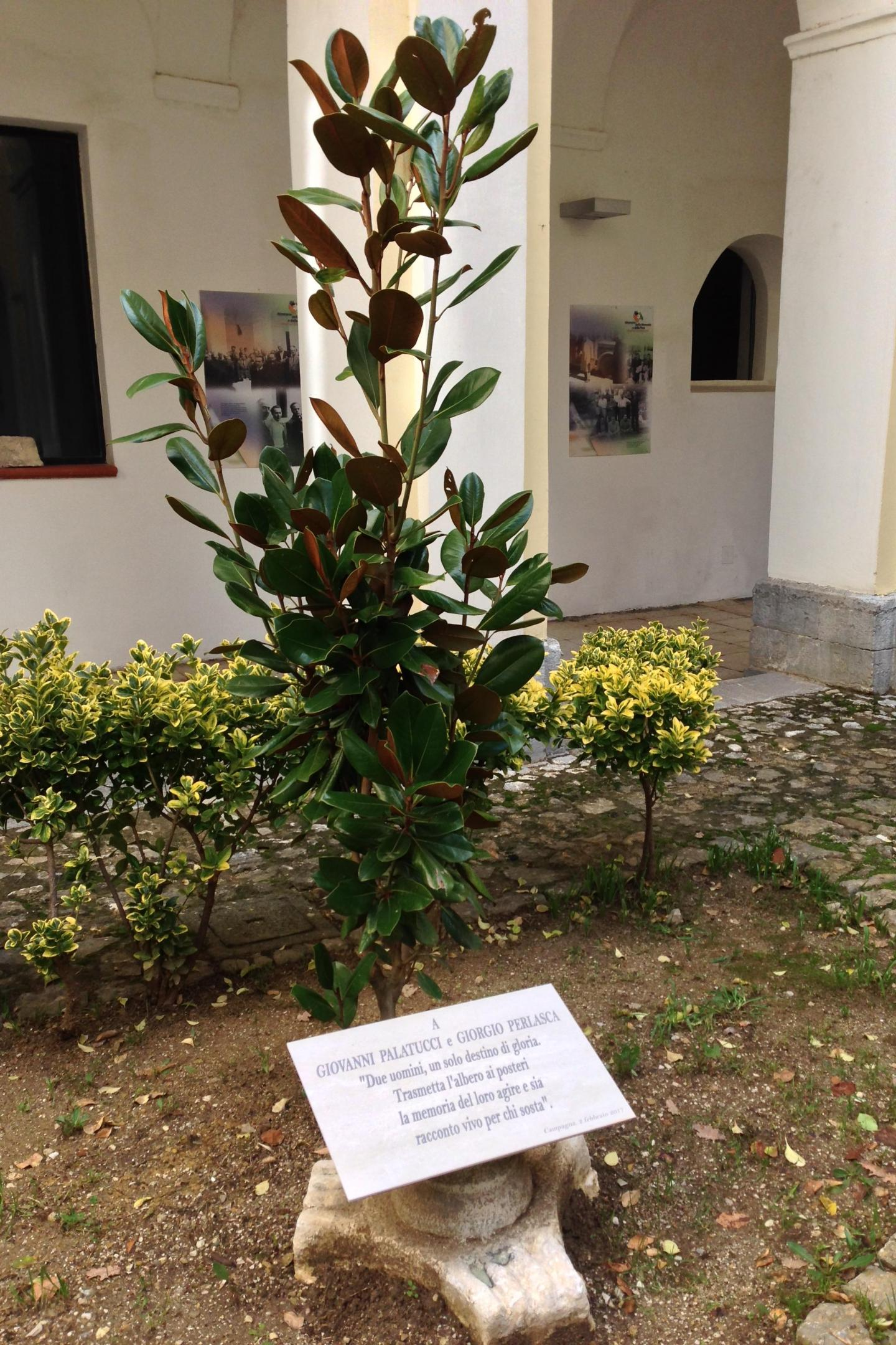 The magnolia tree dedicated to Giorgio Perlasca and Giovanni Palatucci.